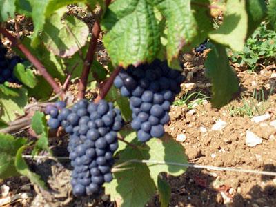 wine_20110619_03